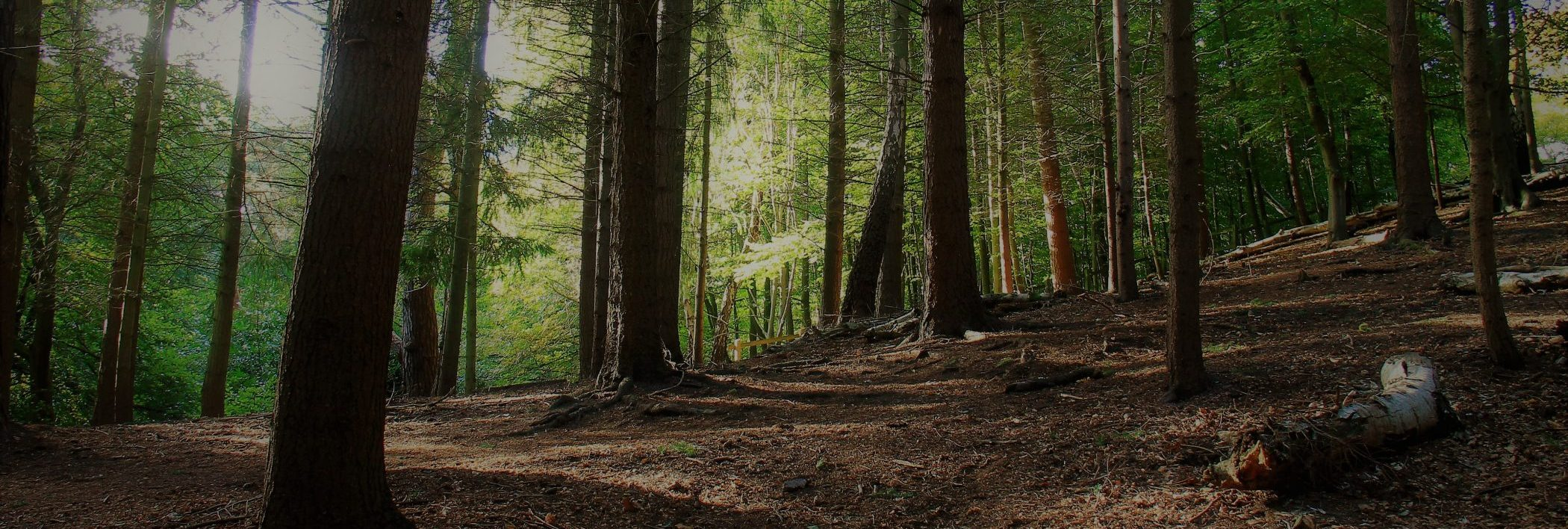Ancestral Woods/woodland trees photograph for inspiration